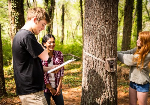 Students writing notes from a trail camera on a tree
